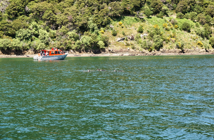Delfine-Marlborough-Sounds