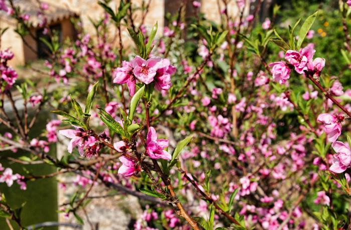 Blumen-Mallorca