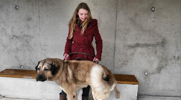 Hund-im-Hierheim