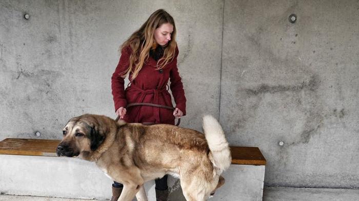 Pate-für-Tierheimhund