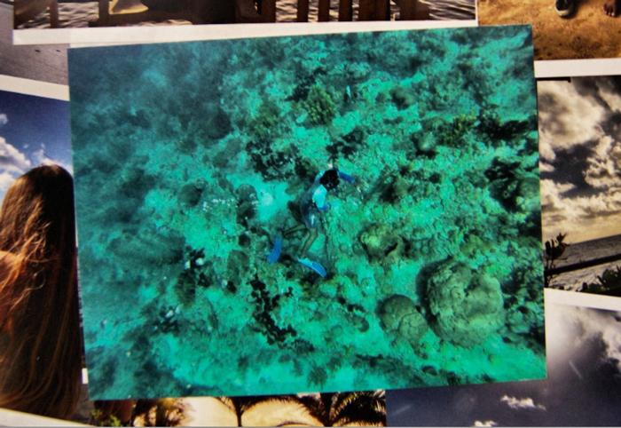 Unterwasserwelt-Dominica