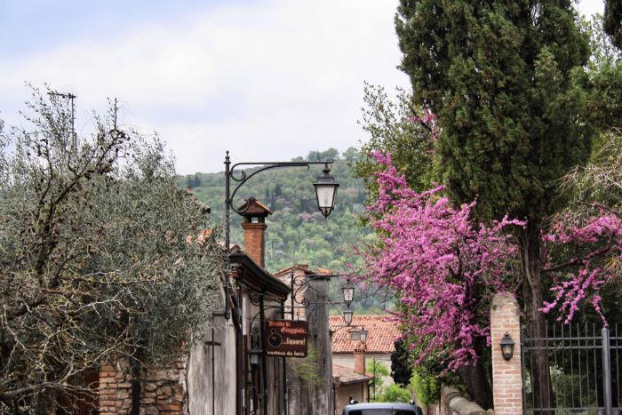 Blumen in Padua