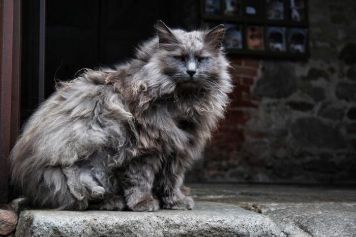 Grumpy Cat in Padua
