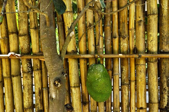 Nha-TrangJackfrucht