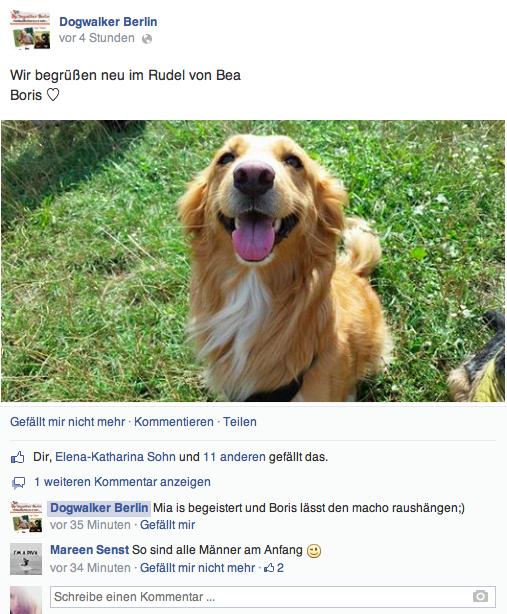 dogwalker berlin