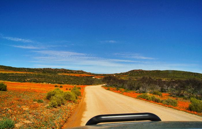 Blumenmeer-Afrika-Namaqualand