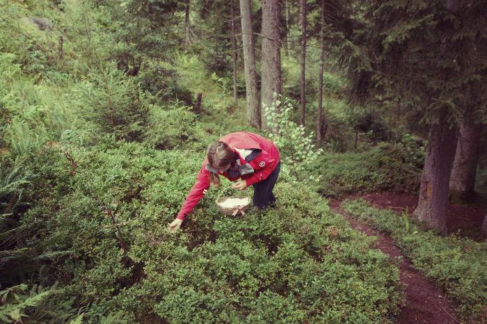 Herbst Wochenende Im Wald