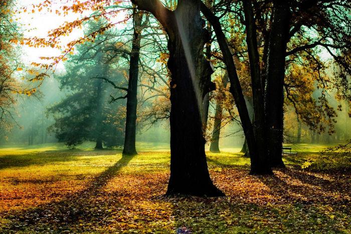 Herbst Wochenende Wald Licht