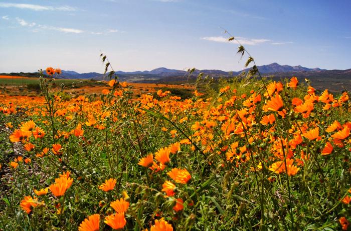 Namaqualand-Afrika