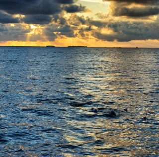 Kurumba – an island for beginners and dolphin lovers