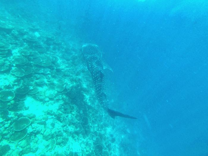 Walhai-Maafushivaru
