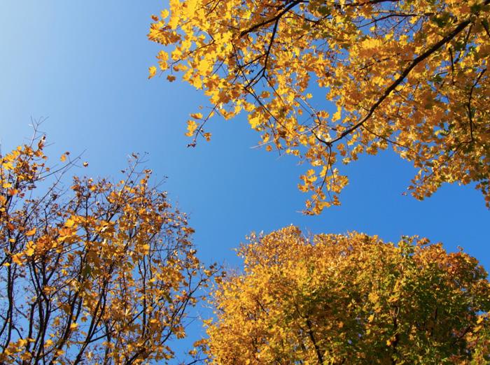 Herbst-Berlin