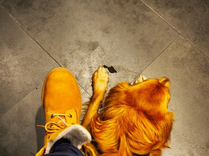 ausklapprampe für hunde