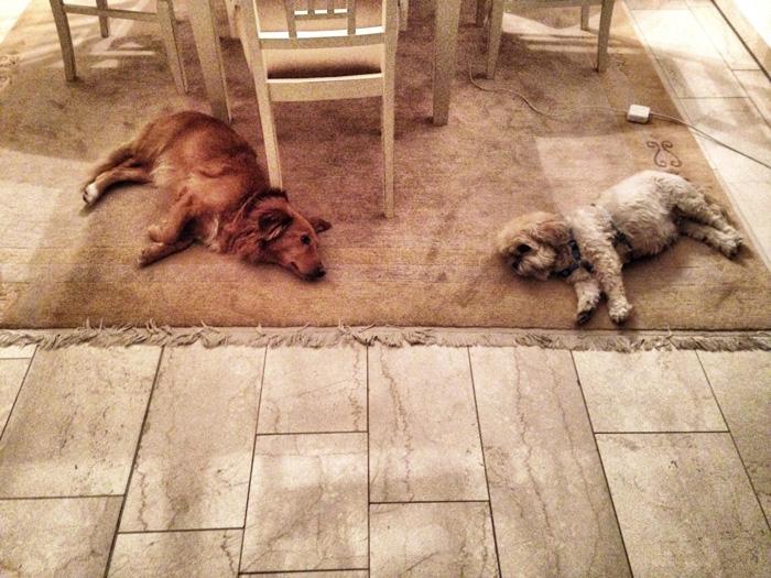 Tote-Hunde