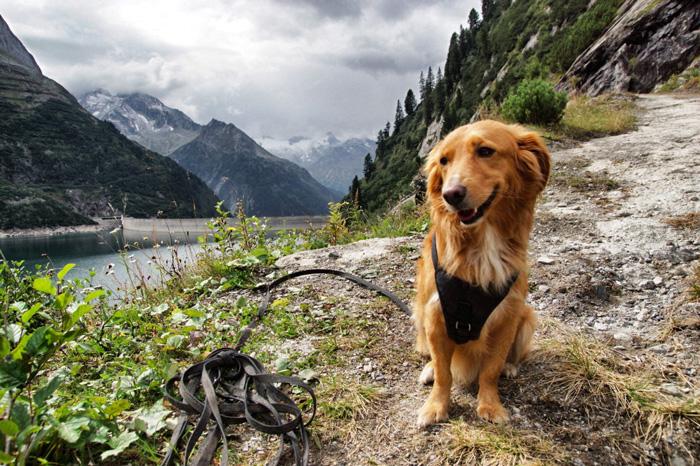 Urlaub-Hund