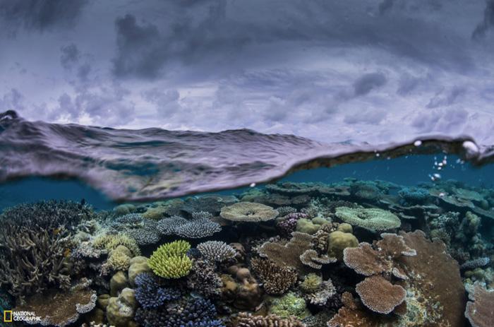 Weltmeere-Korallen
