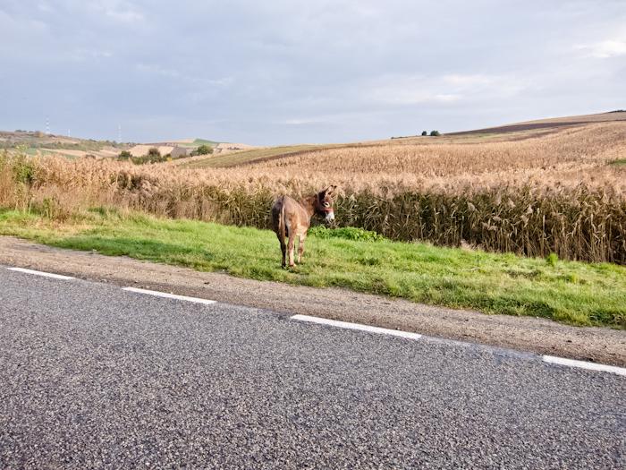 Esel-Rumänien
