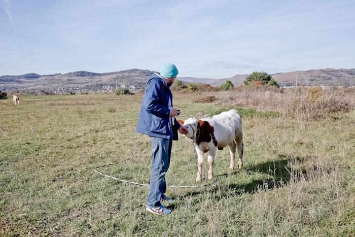 Kuh-Wiese-Mann
