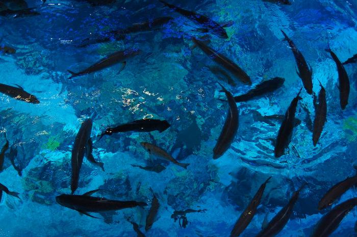 Dubai Aquarium Fischschwarm