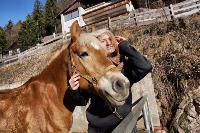 Haflinger_reiten_Südtirol_Haflinger_blond-w700