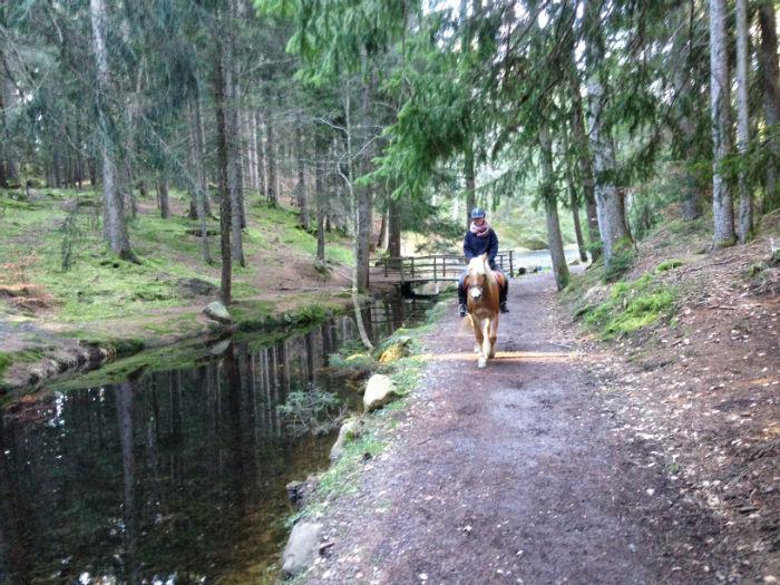Haflinger_reiten_Südtirol_Märchenwald2-w700
