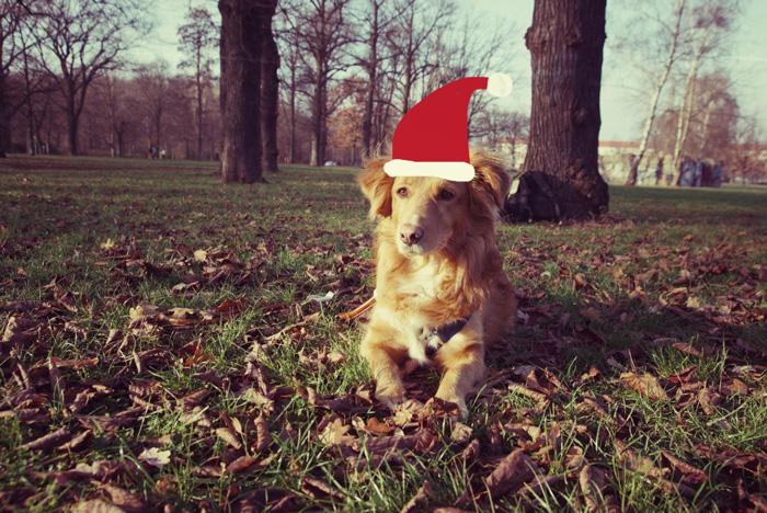 Hundi-Weihnachten