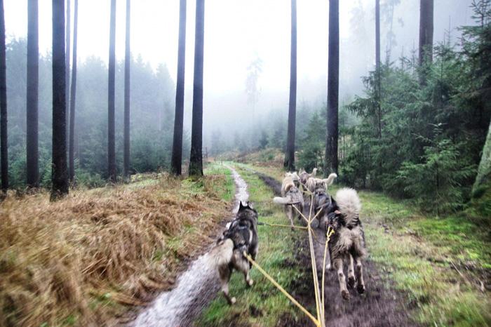 Husky-rennen
