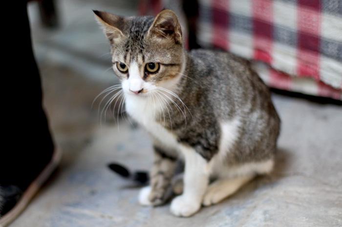 Katze-Izmir