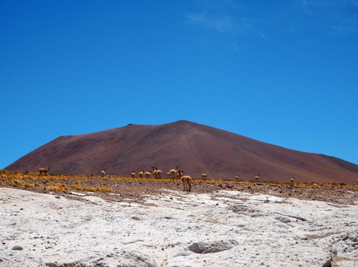 Chile-Tiere