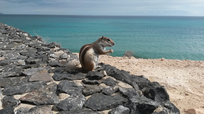 Urlaub-Streifenhörnchen