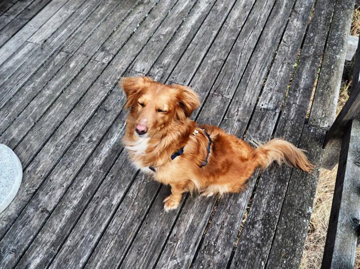 Boris-Hund
