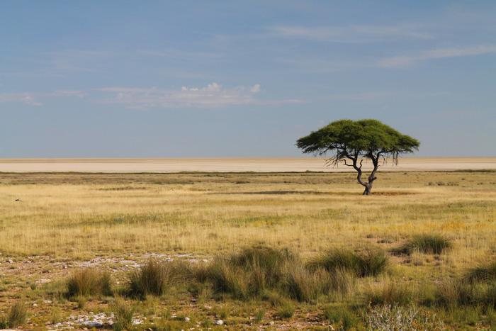 Etosha-National-Park-(21.-24.04.14)-31
