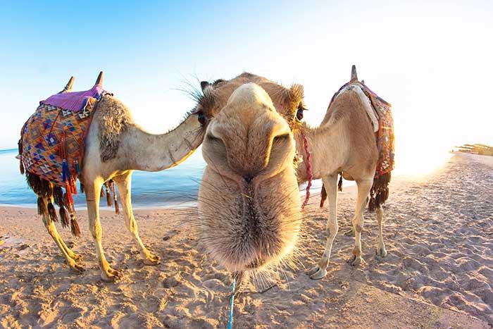 Ägypten-Soma-Bay