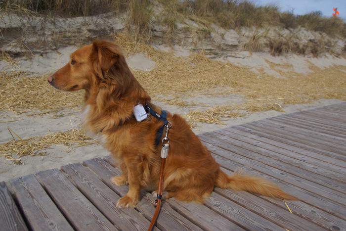 GPS-Hunde