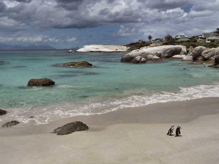 Simons-Town---Pinguine