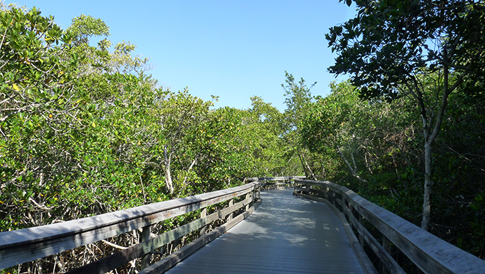 Clam Pass County Park Boardwalk