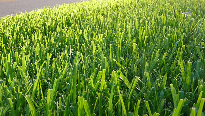Naples Gras