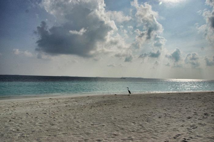 Maafushivaru - Beach