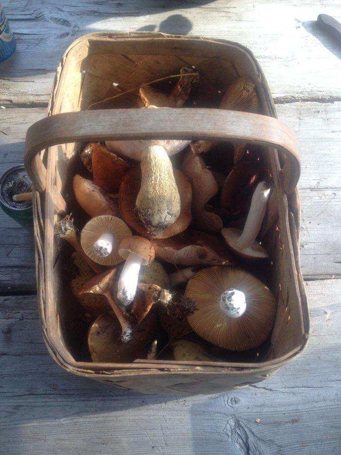 Urlaub in Turku - Pilze sammeln