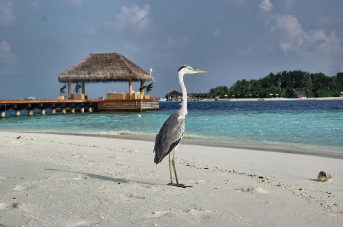 Maafushivaru - Maledives