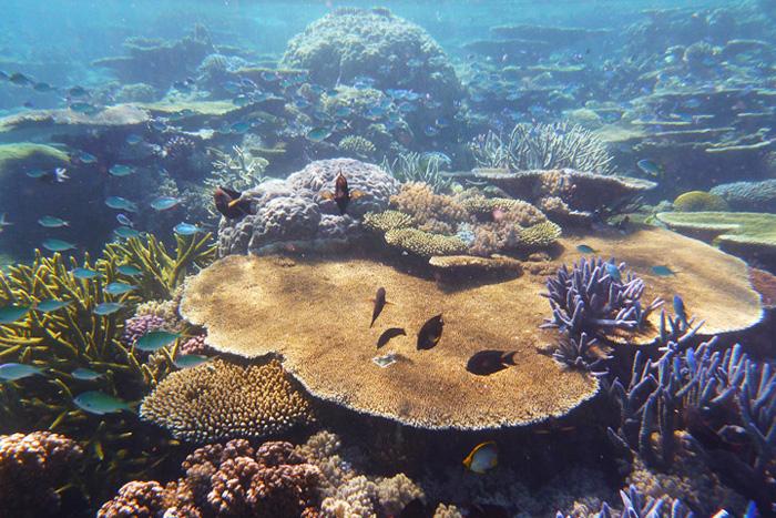 Ostküste_Australiens_GreatBarrierReef_Unterwasserwelt