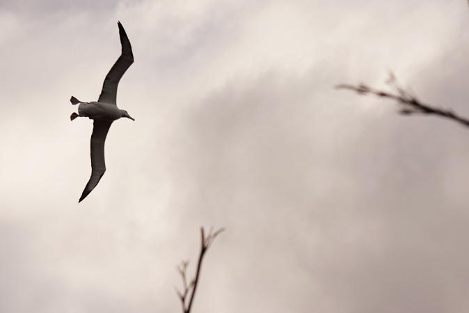 Tierbeobachtung_01_Albatross