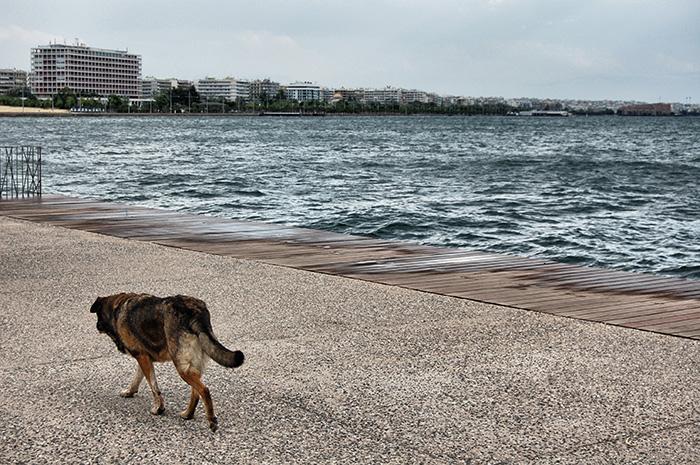 urlaub-in-thessaloniki-straßenhund