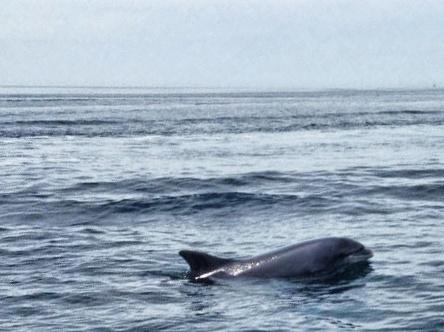 west-coast-of-ireland_dingle-delphin