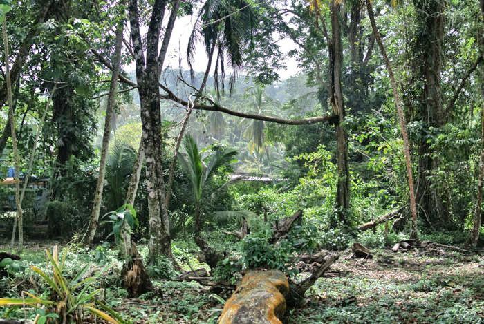 Tipps für Costa Rica_Dschungel
