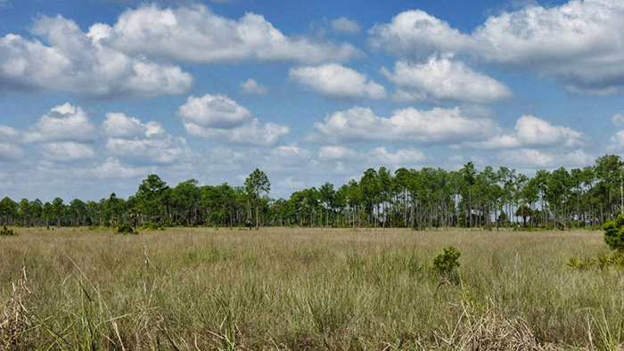 Everglades-Landscape-2
