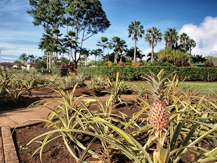 Oahu_Dole-Plantage-Oahu