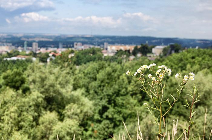 Urlaub-in-Ostrava_Blick-vom-Vulkan-mit-Blume