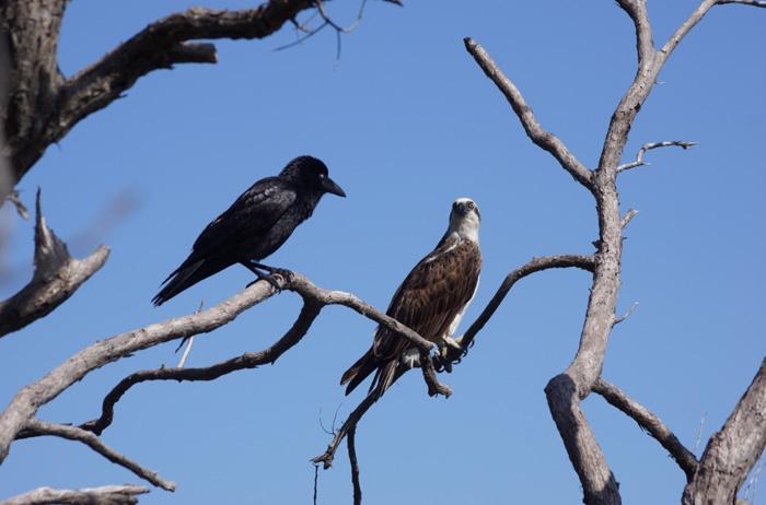 Adler-Nationalpark