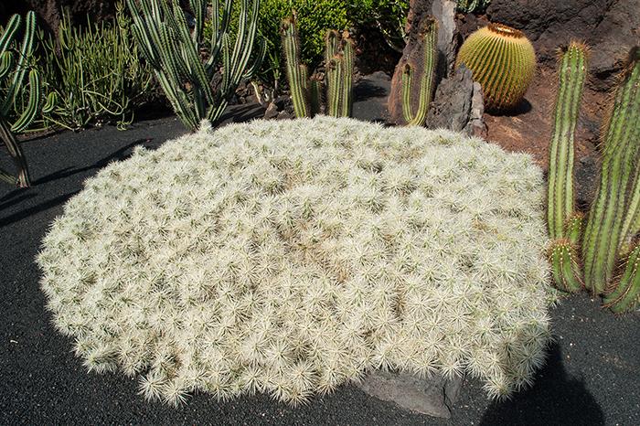 Lanzarote_Kaktus_Garten